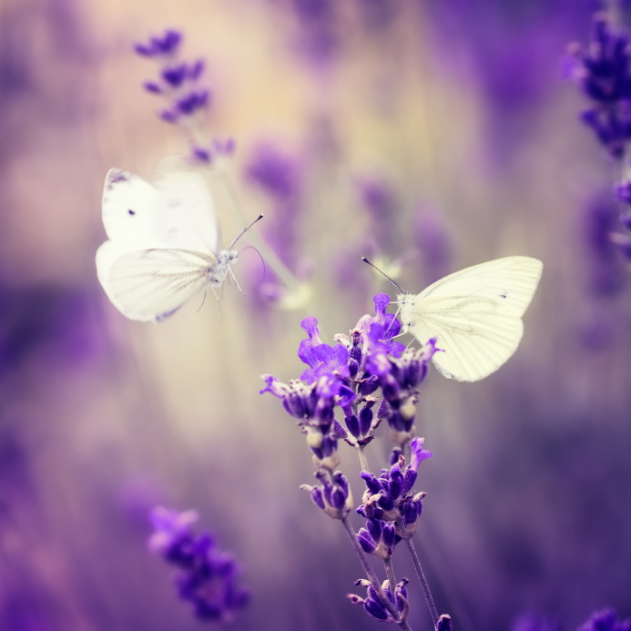 Want Greater Success? Nurture Your Butterflies