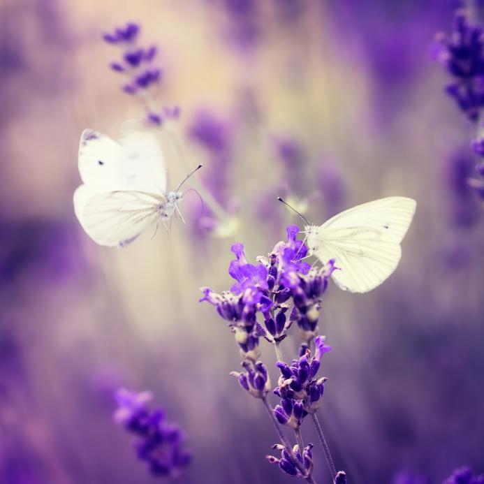 Want Greater Success? Nurture Your Butterflies